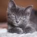 cat-2684445_960_720