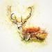 deer-2308100_960_720