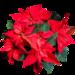 flower-1829711_960_720