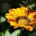 flower-2945346_960_720