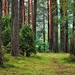 forest-1973952_960_720