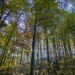 forest-2763587_960_720