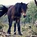 horse-1977122_960_720