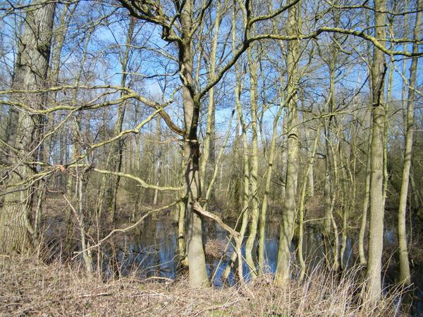 Wellemeersenpad Denderleeuw