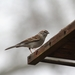bird-3194321_960_720