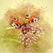 butterfly-3192156_960_720