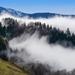 fog-3099200_960_720