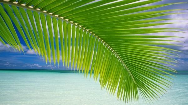 beach-leaves_1462749353
