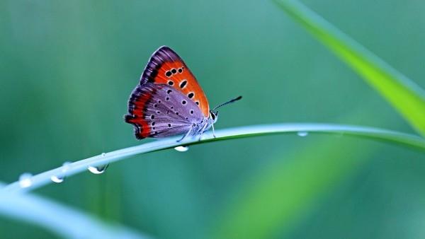 butterfly_1247298405