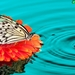 butterfly-water-drops_359531971