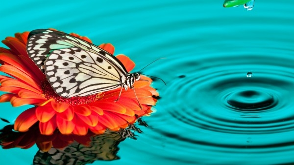butterfly-water-drops_359531971