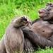 relaxing-monkey_1896079631