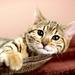 cute-cat_1289532776