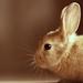 rabbit_41604550