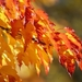 autumn-red-leaves_2027056679