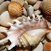 shells-rocks_1783683121