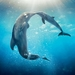 dolphin-tale-2_1072355314