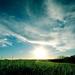 green-grass-blue-sky_901972424