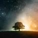 tree-field-2_1458382245