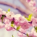 tree-flowers_1691964305