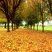 trees-yellow-leaves_65966099