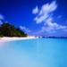 palm-trees-beach_868526822