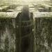 the-maze-runner_1739701366