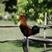 bird-3212621_960_720