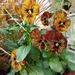 flower-3202299_960_720
