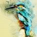 kingfisher-3199927_960_720