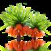 blossom-2800489_960_720