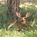 deer-2081638_960_720