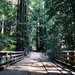 forest-1246631_960_720