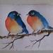 Kleurrijke vogeltjes