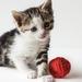 foto 1 tot 6 kittens  gevoed met papfles na dood van mamapoes