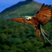 bird-wallpaper-flying