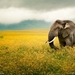 desktop-hd-pictures-of-national-geographic-animals - kopie
