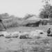 1953:  naar de markt