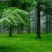 1296619-green-forest