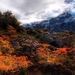 Autumn-Nature