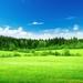 grass-landscape-wallpaper-f23c181af81d788c8ad1a042dc300166