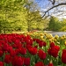 android-amazing-parksnetherlands-keukenhof-pictures-tulips-love-f