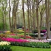 Forest-garden-Keukenhof-Holland