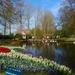 Jardins-de-Keukenhof-Amsterdam-Holanda4