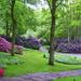 keukenhof_gardens_lovely_nice_grass_flowers-UeVG