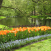 Keukenhof-Dutch-Tulip-Festival_Flowers-amongst-beautiful-trees-an