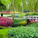 keukenhof-gardens-photos-13