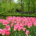 Lisse,Keukenhof  Netherlands 1242659099