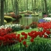 nature-images-hd-colorful-tulips-garden-1024x640
