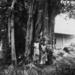 1953: 5 bomen en 5 vrouwen